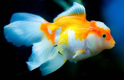 ماسی …. ن. ریزان فەتاح
