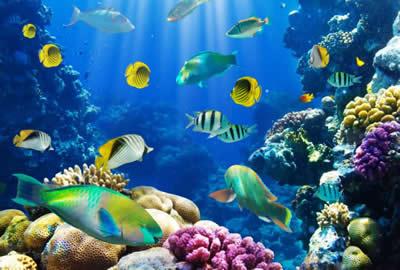 هۆنراوه بۆ مندالان – نیشتمانی ماسی … عەلی حەمەڕەشید